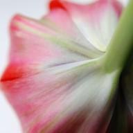 © www.kleureik.nl Tulp