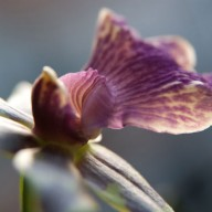 © www.kleureik.nl Orchidee