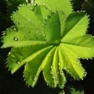 © www.kleureik.nl vrouwemantel groen